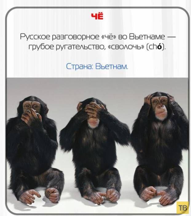 Какие русские слова нельзя говорить за границей (11 фото)