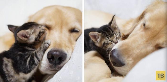 Трогательная история о кошке с собакой (7 фото)