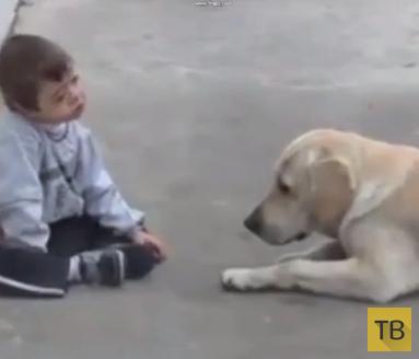 Удивительный ролик о нежности лабрадора и мальчика с синдромом Дауна