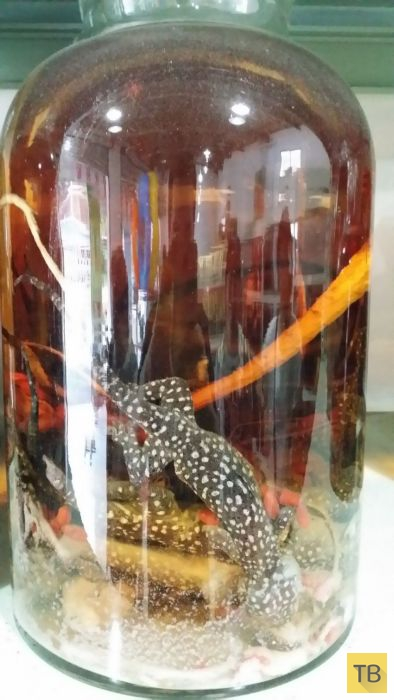 Необычные ингредиенты для производства элитного алкоголя в Китае (12 фото)