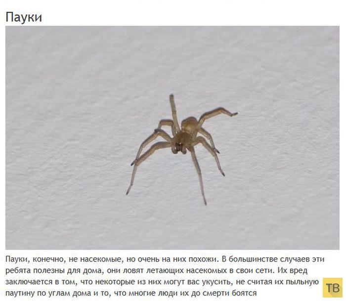 Топ 15: Мерзкие создания, которые могут жить в вашем доме (15 фото)