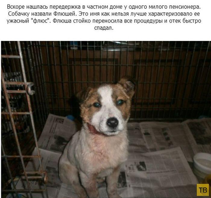 Спасение маленького щенка (11 фото)