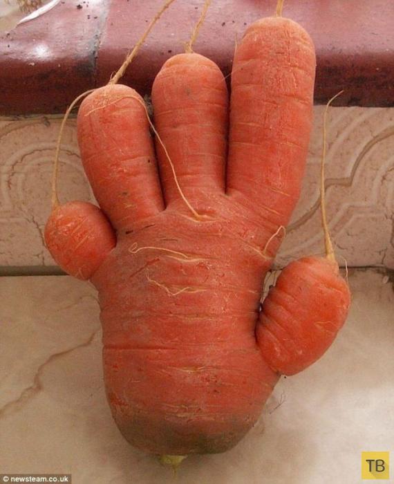 Прикольные картинки: Овощи похожие на нечто другое (27 фото)