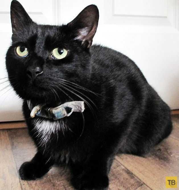 Кот спас 48-летнюю британку, впавшую в кому  (3 фото)