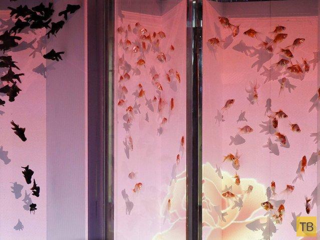 «Арт Аквариум» выставка в Японии (12 фото)