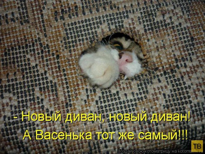 Лучшие котоматрицы недели, часть 11 (50 фото)
