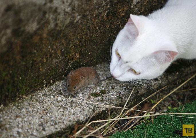 Лучшие фотографии животных за неделю, часть 2 (19 фото)