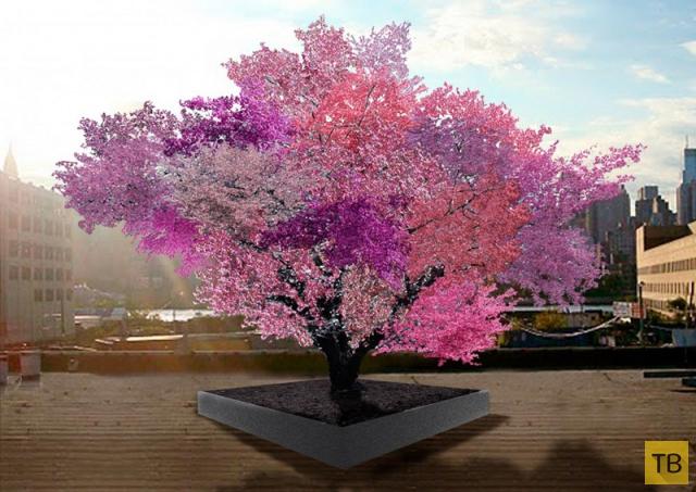 Удивительное дерево, способное приносить 40 видов разных плодов (6 фото)