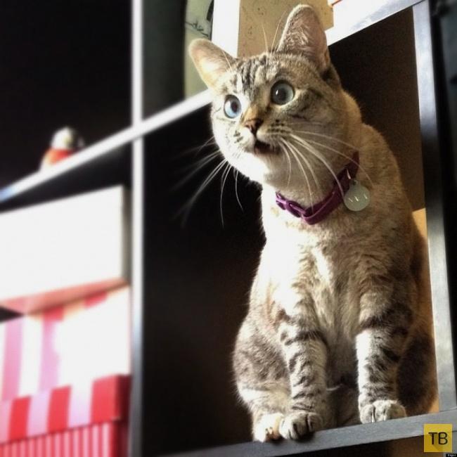 Забавные животные, которых удивляет этот мир (18 фото)