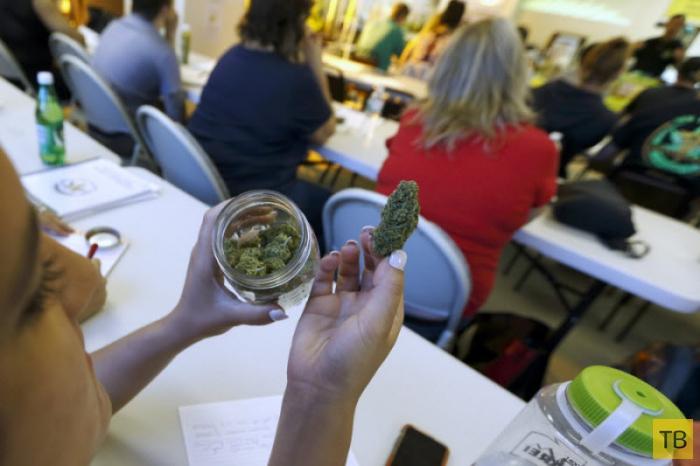 Индустрия марихуаны (8 фото)