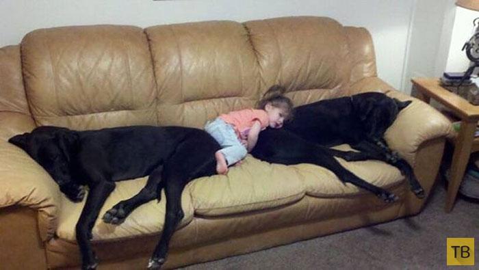 Маленькие дети и их большие собаки (22 фото)