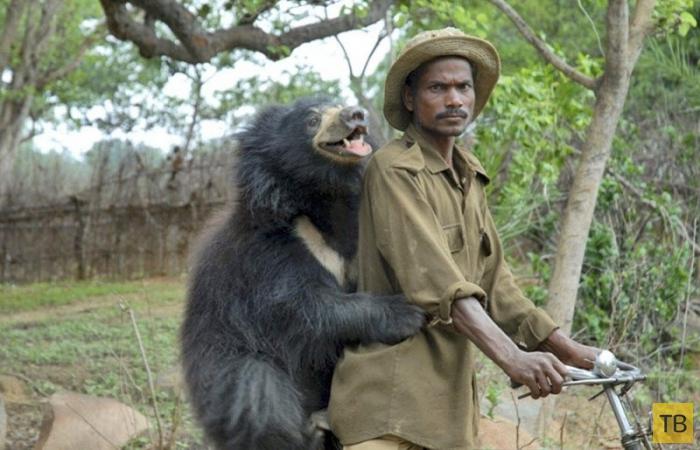 Ручной медвежонок-губач покорил интернет (8 фото)