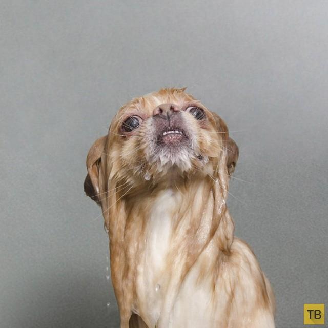 Позитивные фотографии собак сделанных во время купания фотографом Софи Гамaн (10 фото)