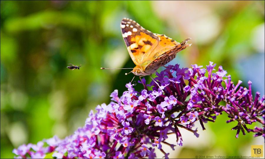 Бабочка, которая топит корабли ... (6 фото)