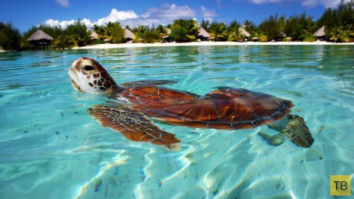 Райский остров Бора-Бора (31 фото)