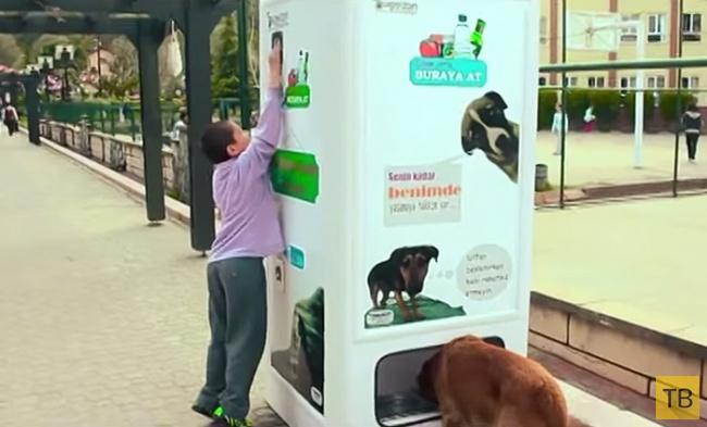 Автомат, который кормит бездомных животных (2 фото + видео)