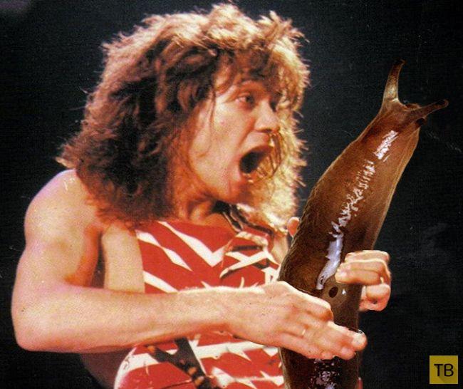 Если бы гитаристы играли на слизнях (8 фото)