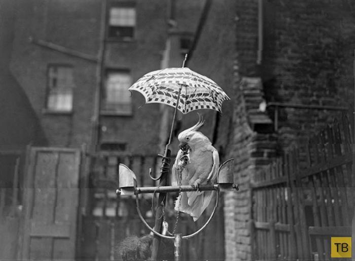 Как спасались от летнего зноя до изобретения кондиционера (18 фото)