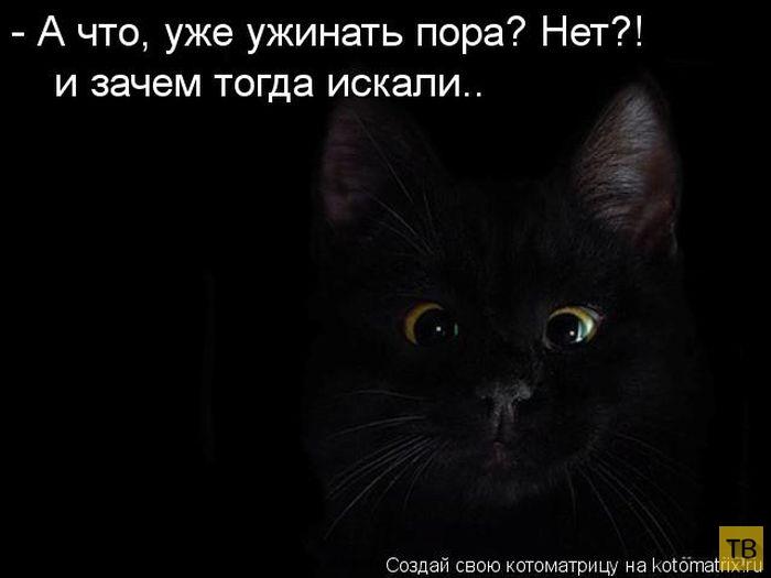 Лучшие котоматрицы месяца (49 фото)