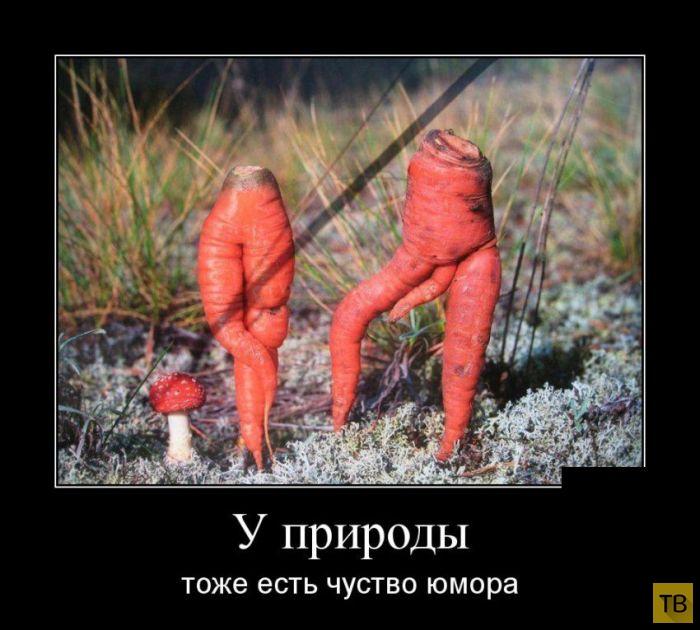 Подборка демотиваторов 13. 08. 2014 (30 фото)