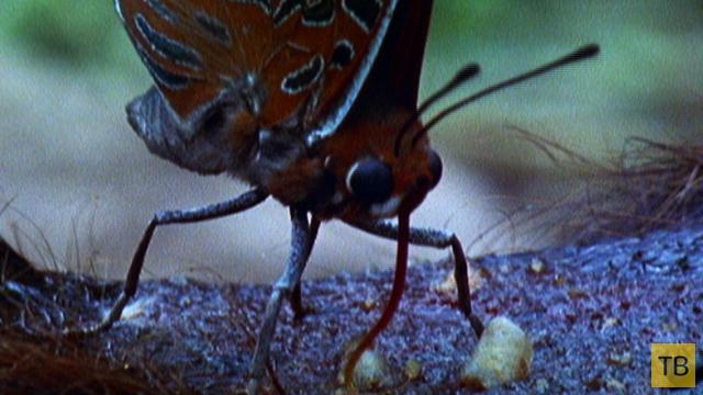 Топ 9: Представители животного мира, которые очень любят кровь (9 фото)