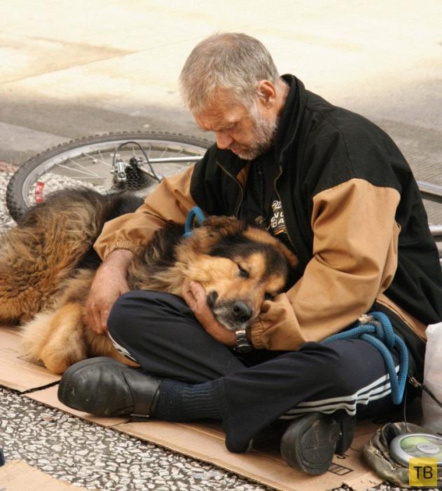 Трогательная дружба между бездомными и их собаками (13 фото)