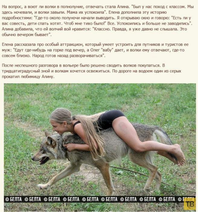 Семья белорусских фермеров вырастила стаю волков (12 фото)