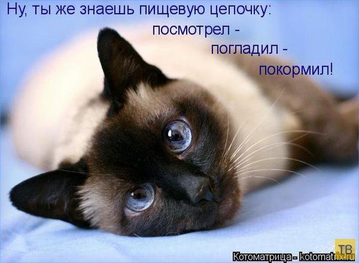 Лучшие котоматрицы месяца, часть 2 (51 фото)
