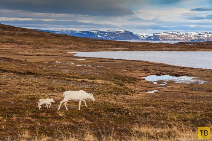 Самая северная точка Европы - норвежский мыс Нордкап (16 фото)