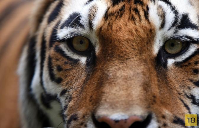 Лучшие фотографии животных за неделю, часть 3 (22 фото)