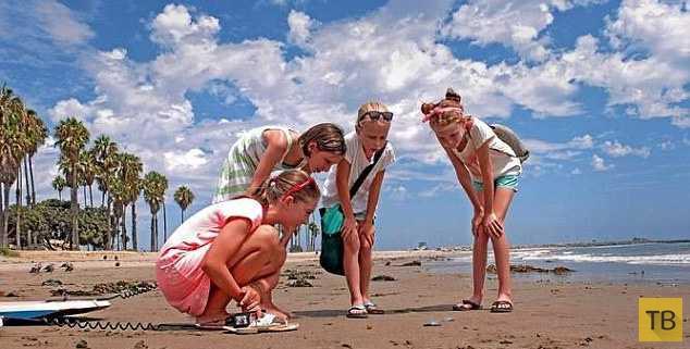 На пляжи Калифорнии вторглись загадочные синие существа (6 фото)