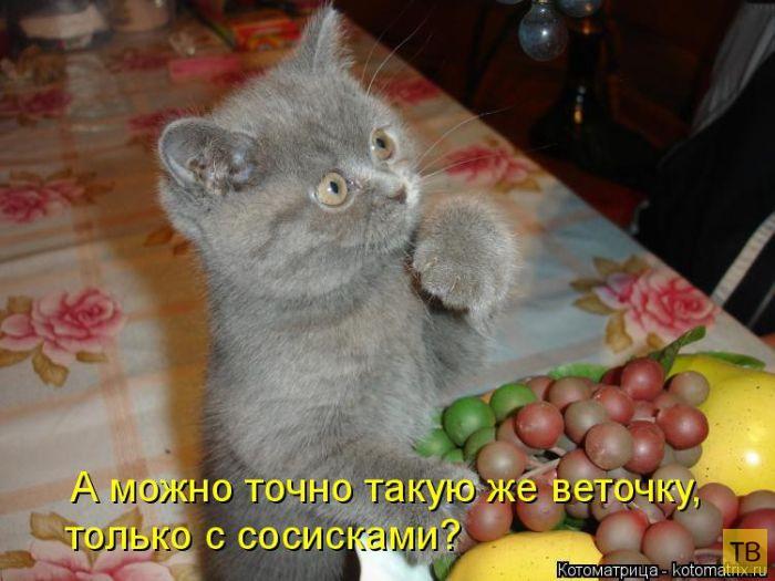Прикольные картинки домашних животных с надписями, цвет картинки