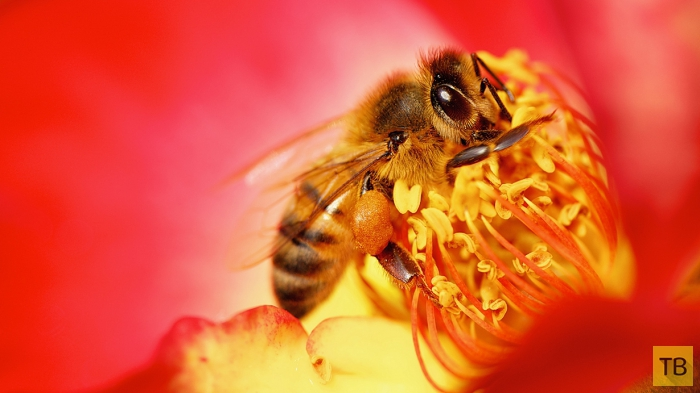 Любители нектара (14 фото)