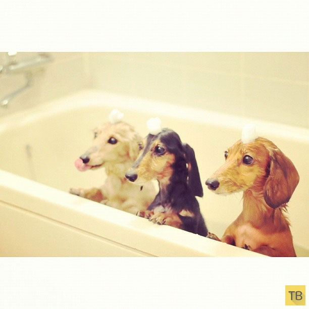 Подборка самых милых и забавных домашних животных в Instagram (73 фото)