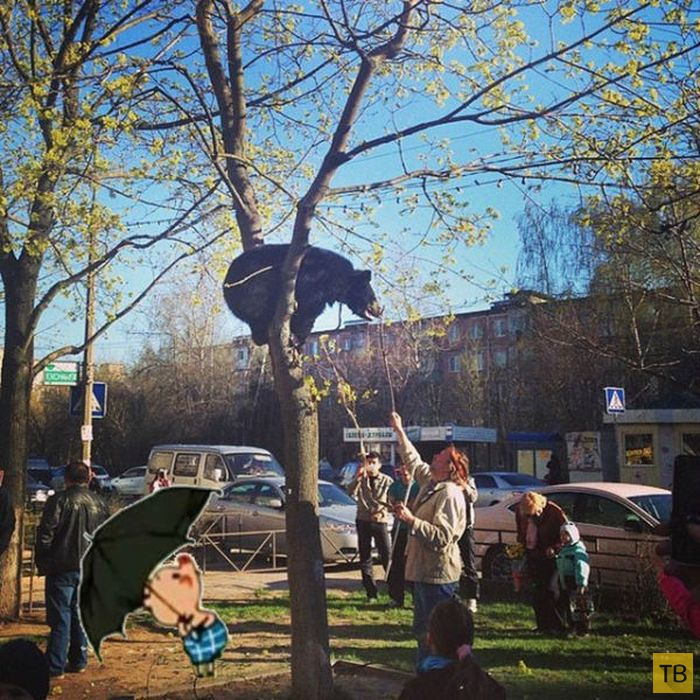 Медведи на улицах российских городов (29 фото)
