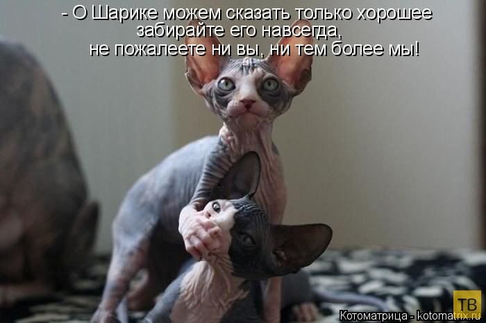 Лучшие котоматрицы за неделю, часть 3 (50 фото)
