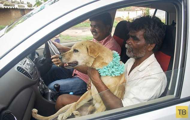 В Индии девушка вышла замуж за пса ради спасения деревни (6 фото)
