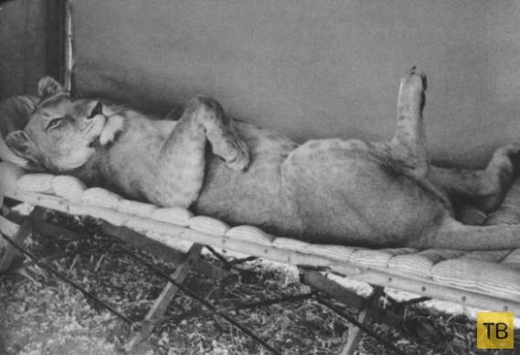 Топ 10: Самые известные в мире животные (10 фото)