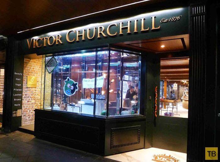 Мясная лавка Виктора Черчилля в Сиднее - одна из лучших в мире (18 фото)
