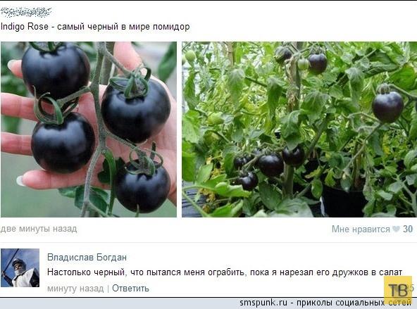 Прикольные комментарии из социальных сетей, часть 209 (30 фото)
