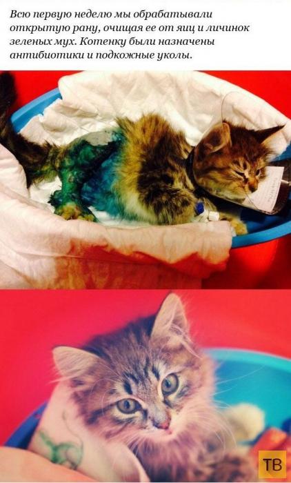 История спасения котенка с переломанными лапами (12 фото)