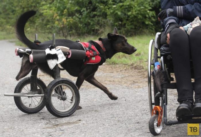 Инвалидность - не приговор! (10 фото)