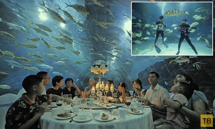 Ужин в аквариуме (8 фото)