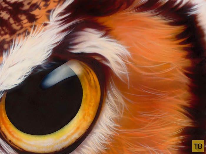 Потрясающие портреты животных, смотрящих в глаза зрителям (9 фото)