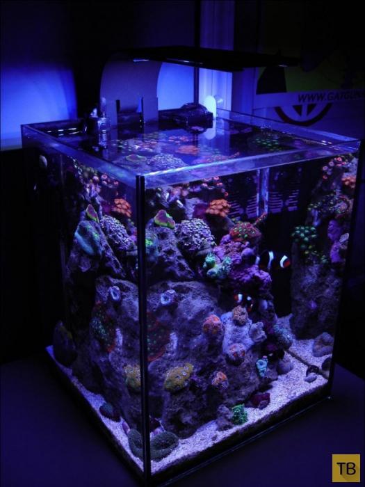 Необычные удивительные аквариумы (30 фото)