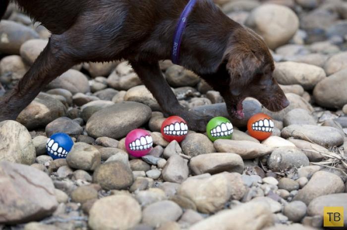 Мячики для собак Rogz Grinz (9 фото)