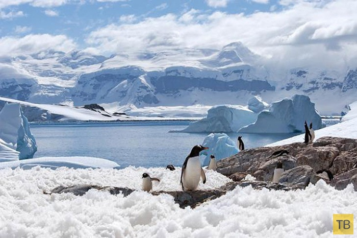 Интересные и удивительные факты от  National Geographic (50 фото)