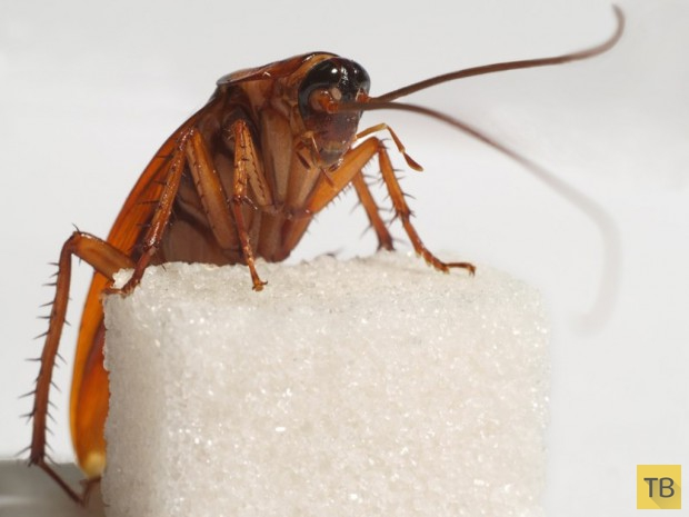 Жесть!!! Топ 10: Животные, которых люди едят живыми (9  фото +7 видео)