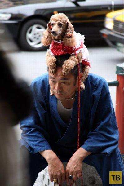 Подборка странных и необычных фотографий, которые можно сделать только в Японии (44 фото)