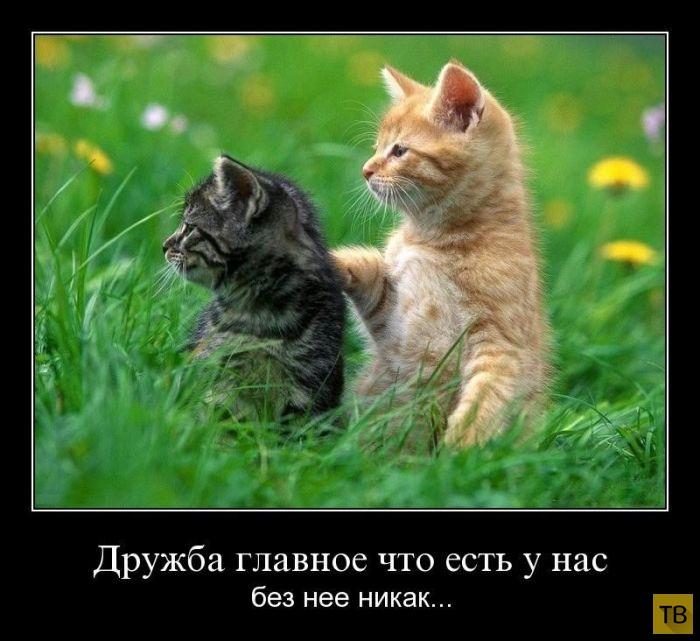 Подборка демотиваторов 18. 09. 2014 (30 фото)